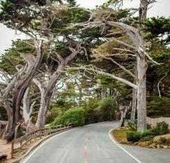 Monterey 17Mile Drive