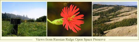 russian_trip