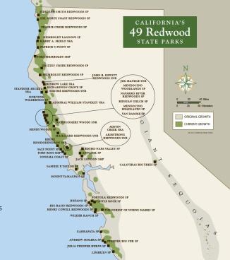 49-redwood-parks-large