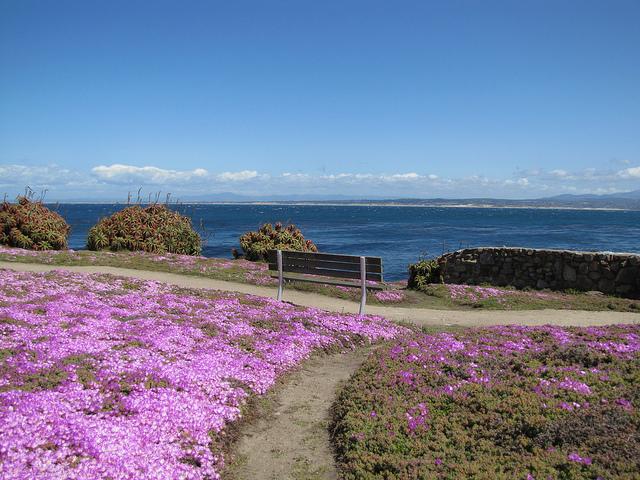 pacific_grove_wildflowers