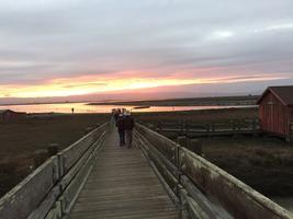 Twilight Marsh Walk