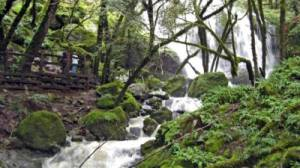 mt-tam-waterfall